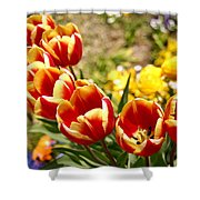 Tulips In Japan Shower Curtain