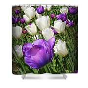 Tulips In Purple And White Shower Curtain