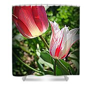 Tulips In Red And White Shower Curtain
