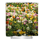 Tulips In Spring Shower Curtain