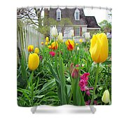 Tulips In Williamsburg Shower Curtain
