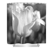 Tulips - Infrared 08 Shower Curtain
