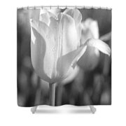 Tulips - Infrared 09 Shower Curtain