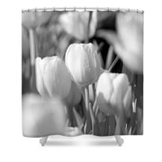 Tulips - Infrared 10 Shower Curtain