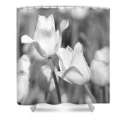 Tulips - Infrared 12 Shower Curtain