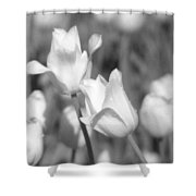 Tulips - Infrared 13 Shower Curtain