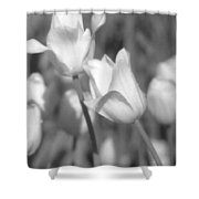 Tulips - Infrared 14 Shower Curtain