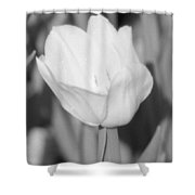 Tulips - Infrared 15 Shower Curtain