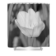 Tulips - Infrared 16 Shower Curtain