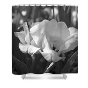 Tulips - Infrared 19 Shower Curtain