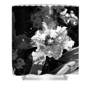 Tulips - Infrared 24 Shower Curtain