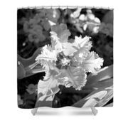 Tulips - Infrared 25 Shower Curtain