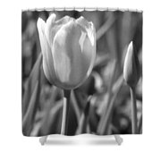Tulips - Infrared 27 Shower Curtain
