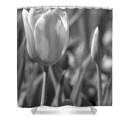 Tulips - Infrared 28 Shower Curtain