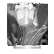Tulips - Infrared 29 Shower Curtain