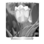 Tulips - Infrared 30 Shower Curtain