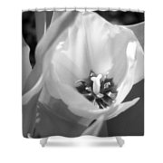 Tulips - Infrared 31 Shower Curtain