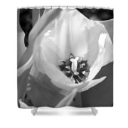 Tulips - Infrared 32 Shower Curtain