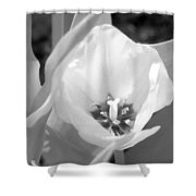 Tulips - Infrared 33 Shower Curtain