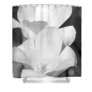 Tulips - Infrared 37 Shower Curtain