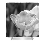 Tulips - Infrared 39 Shower Curtain
