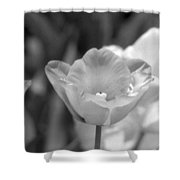 Tulips - Infrared 40 Shower Curtain