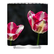 Tulips Of A Kind Shower Curtain