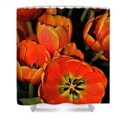Tulips Of Fire Shower Curtain