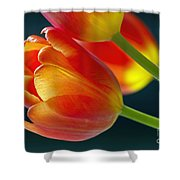 Tulips On Black 2a Shower Curtain