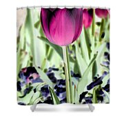 Tulips - Perfect Love - Photopower 2026 Shower Curtain