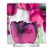 Tulips - Perfect Love - Photopower 2027 Shower Curtain