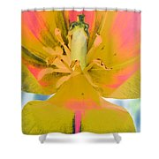 Tulips - Perfect Love - Photopower 2030 Shower Curtain