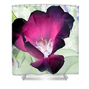 Tulips - Perfect Love - Photopower 2042 Shower Curtain