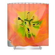 Tulips - Perfect Love - Photopower 2052  Shower Curtain