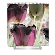 Tulips - Perfect Love - Photopower 2066 Shower Curtain