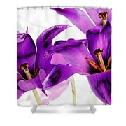 Tulips - Perfect Love - Photopower 2081 Shower Curtain