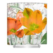 Tulips - Perfect Love - Photopower 2084 Shower Curtain