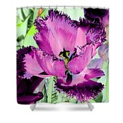 Tulips - Perfect Love - Photopower 2093 Shower Curtain