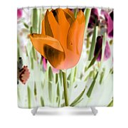 Tulips - Perfect Love - Photopower 2105 Shower Curtain