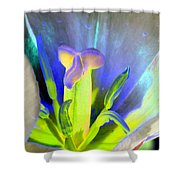 Tulips - Perfect Love - Photopower 2158 Shower Curtain