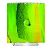 Tulips - Perfect Love - Photopower 2194 Shower Curtain