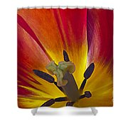 Tulips Petals Shower Curtain