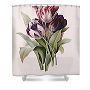 Tulips Shower Curtain
