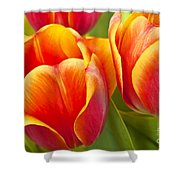 Tulips Red And Yellow Shower Curtain
