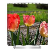 Tulips Red Pink Tulip Flowers Art Prints Shower Curtain