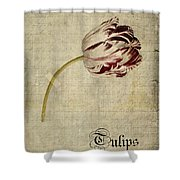 Tulips - S01bt2t Shower Curtain