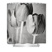 Tulips Still Life In Black And White Shower Curtain