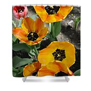 Tulips Tp Shower Curtain