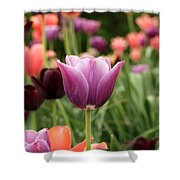 Tulips Welcome Spring Shower Curtain