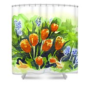 Tulips With Blue Grape Hyacinths Explosion Shower Curtain